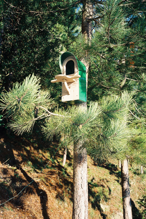 large nest box